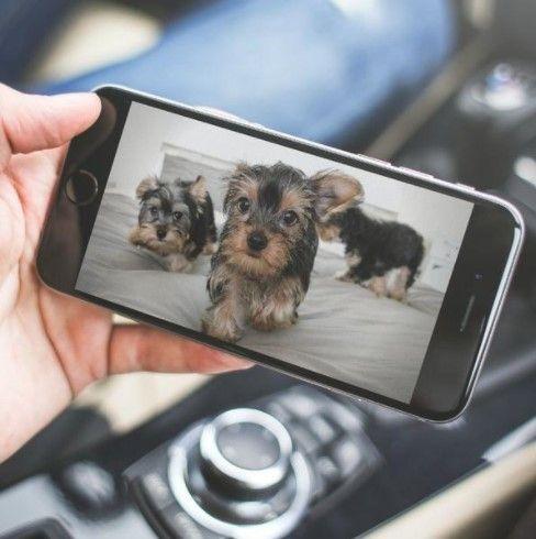 カメラで愛犬を確認